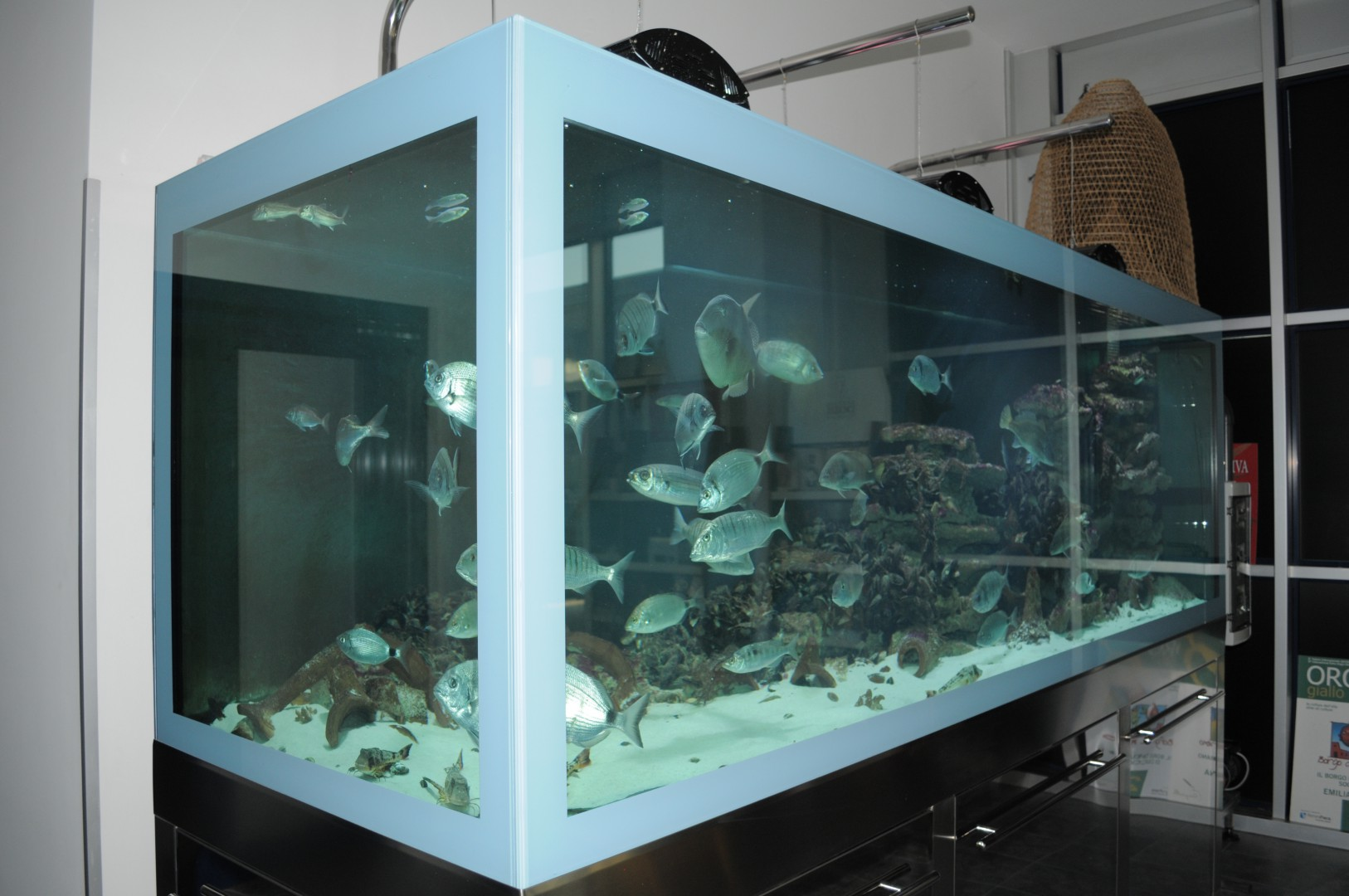 Professional-marine-aquariums